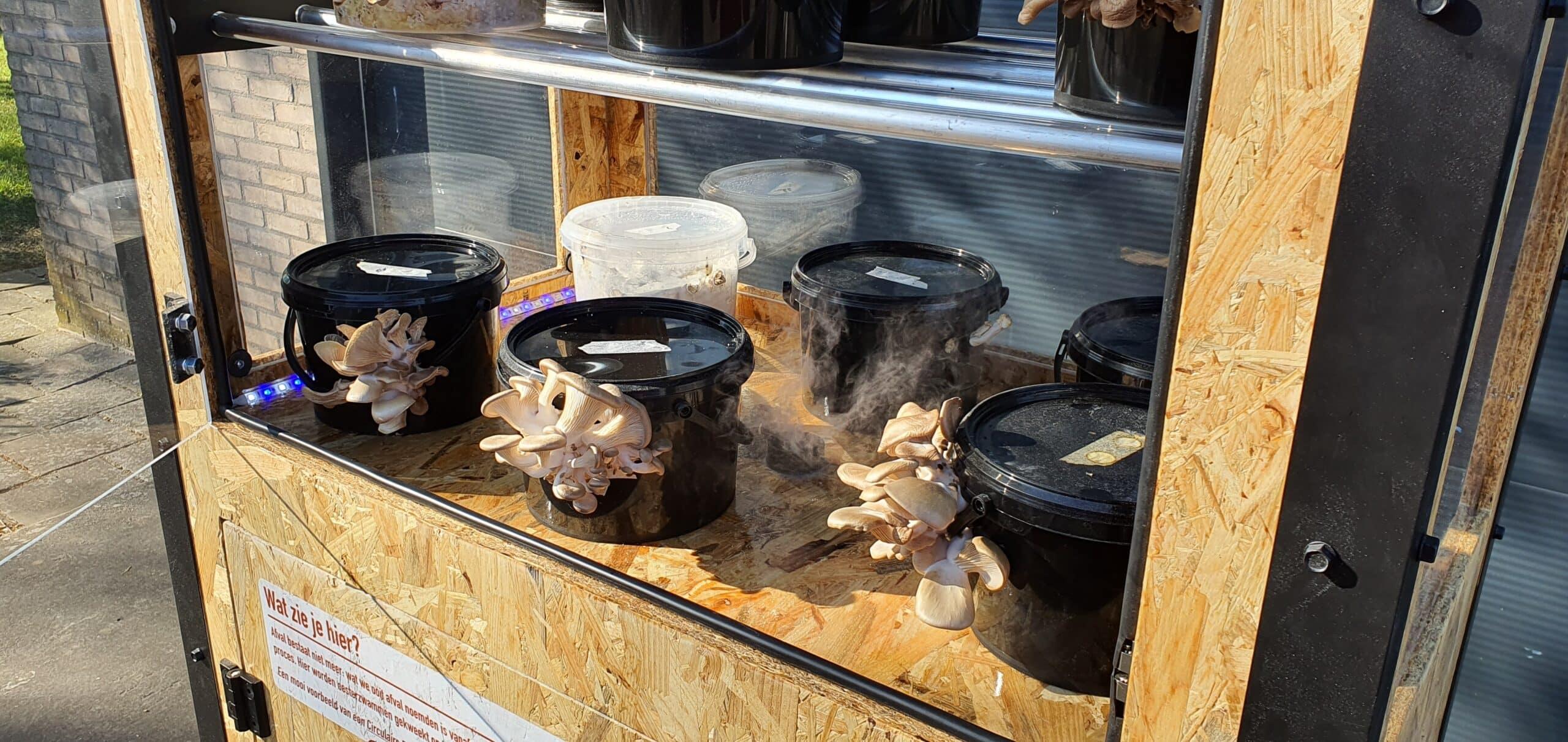 FungiFarm close up oesterzwammen